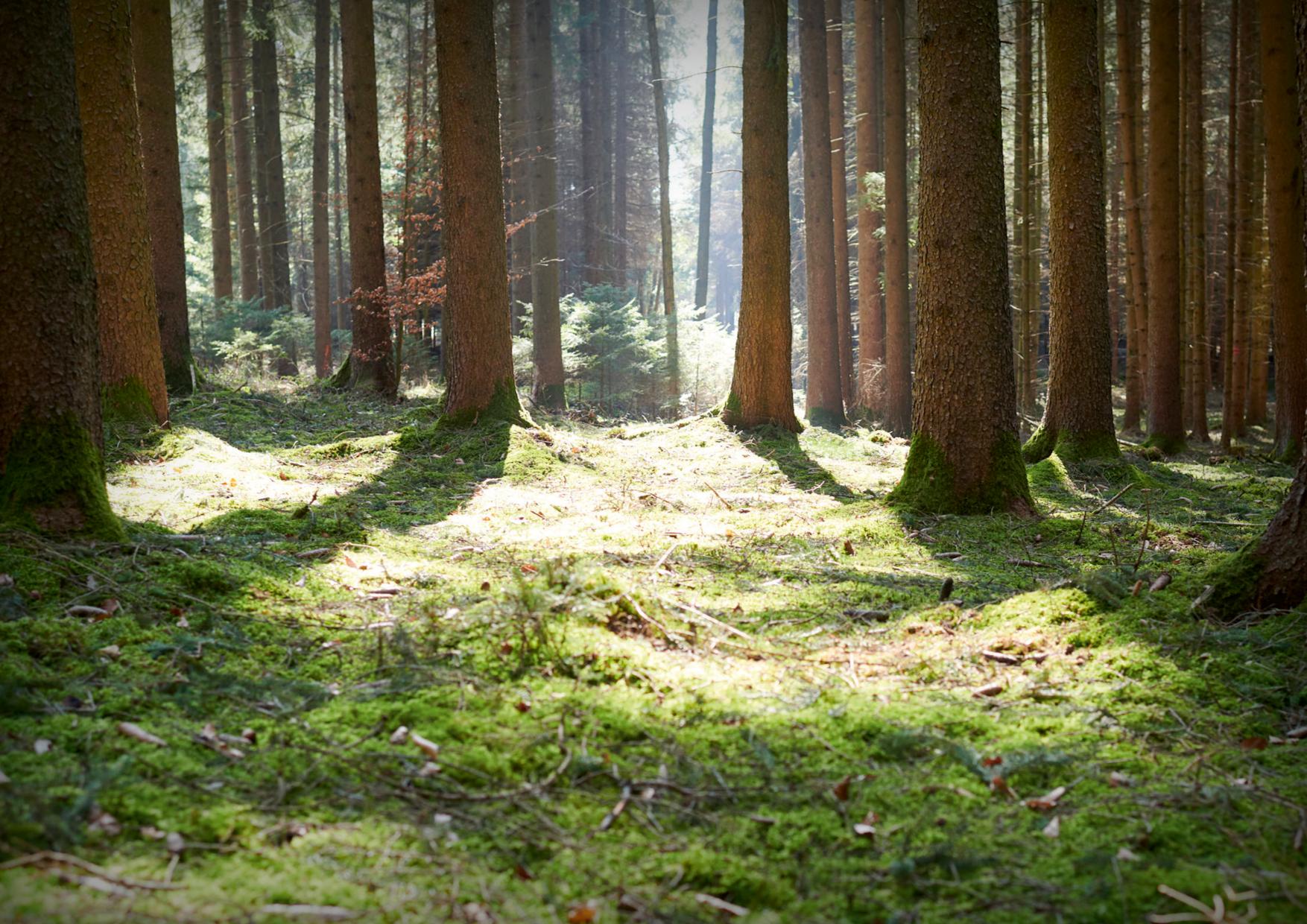 Wald Recht
